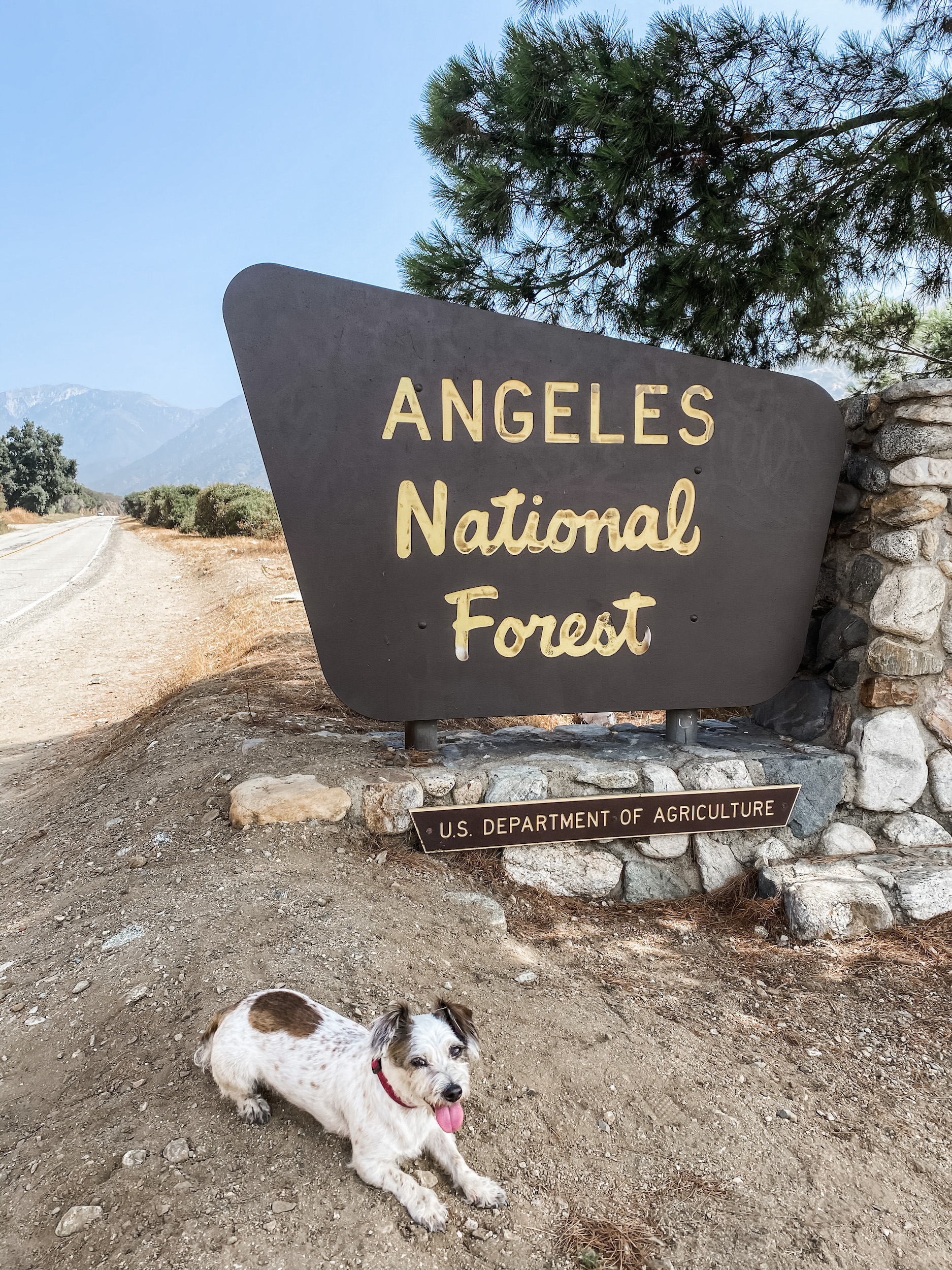 Top Dog-Friendly Hikes in SoCal